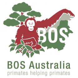 Search Results Web Result with Site Links Borneo Orangutan Survival Australia